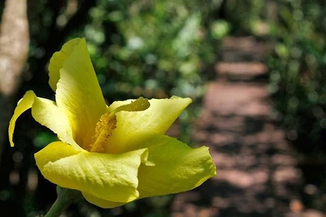 Parque Raimundo Malta Celso Peixoto 30012018 - Parque Raimundo Malta é alternativa natural em Balneário Camboriú