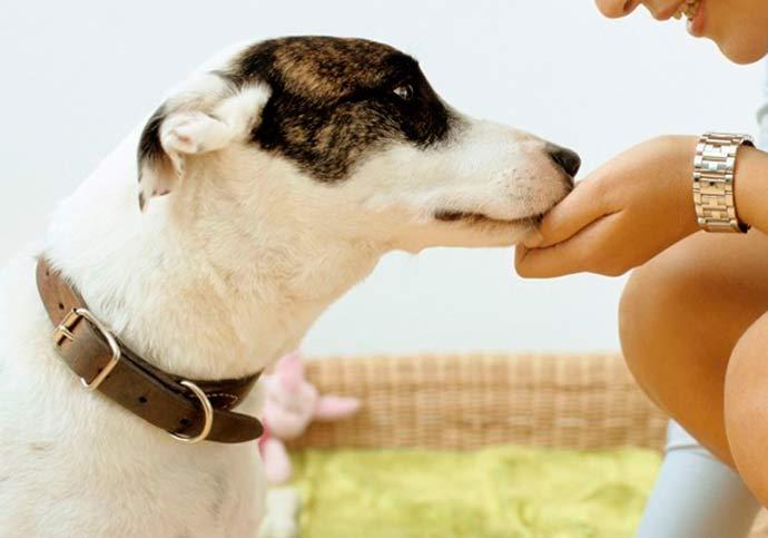 cão feliz - Nota Fiscal Gaúcha já disponibiliza ONGs de proteção animal para indicações
