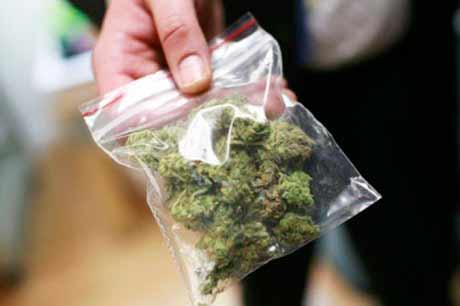 cannabis - Portugal vai discutir legalização da cannabis para fins medicinais