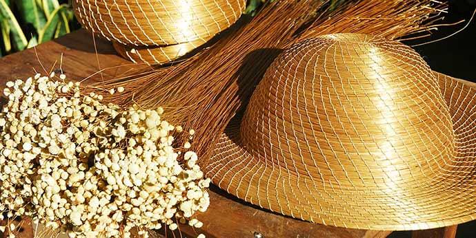 capim dourado 1 - Os encantos naturais do Parque do Jalapão em Tocantins