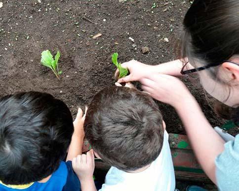"""image - Educação ambiental """"Plantar e Colher"""" promove hortas em Caxias do Sul"""