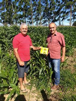 milho vespas torres - Prefeitura de Torres distribui vespas para combater a lagarta do milho