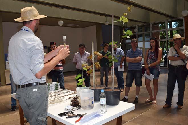 Programa de Melhoramento Genético Uvas do Brasil 2 - Programa de Melhoramento Genético Uvas do Brasil faz 40 anos