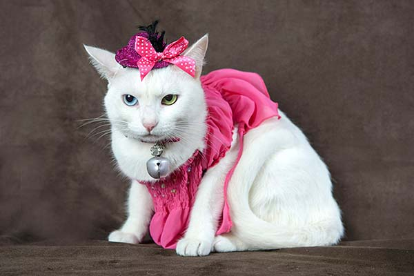 Saúde dos gatos - Cães e gatos alertam para câncer de mama nos pets