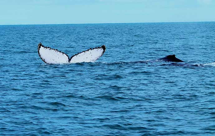 abrolhos - Abrolhos abre cadastramento para turismo embarcado