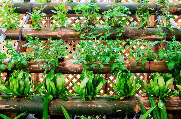 Eu Que Plantei' - Isla cria kits de sementes para quem quer ter uma horta em casa