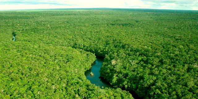 Amazônia - Sistema ajuda produtor rural a fazer recomposição ambiental em qualquer bioma brasileiro
