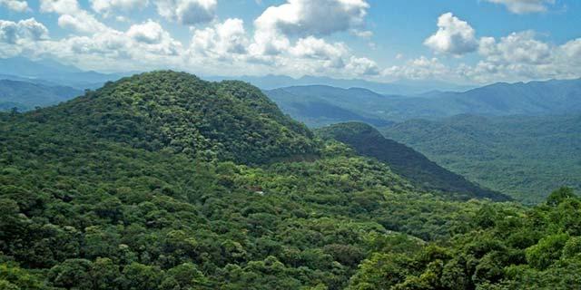 Mata Atlântica - Sistema ajuda produtor rural a fazer recomposição ambiental em qualquer bioma brasileiro