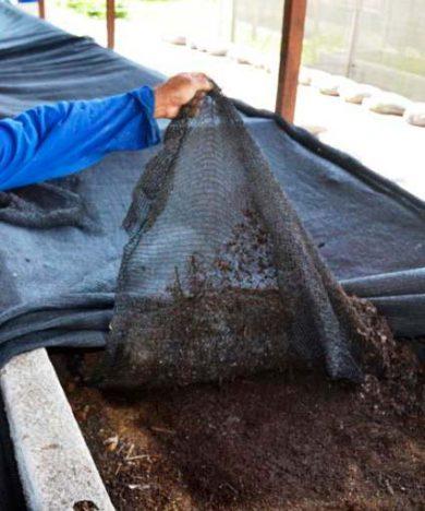 criação minhoca 1 390x468 - Como produzir minhocas e húmus em casa ou em pequenas propriedades