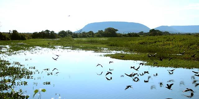 pantanal - Sistema ajuda produtor rural a fazer recomposição ambiental em qualquer bioma brasileiro