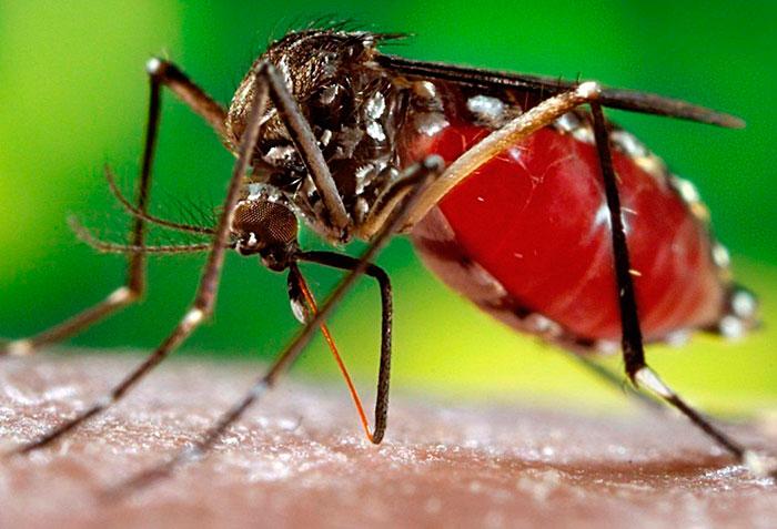 Photo of Infectologista explica diferenças entre Febre Chikungunya e a Dengue