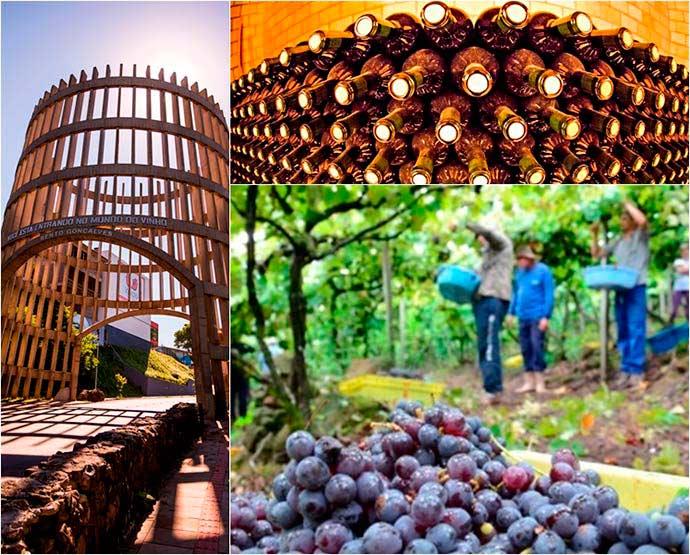 BentoGoncalves embratur - Vindima celebra a safra da uva na Serra Gaúcha
