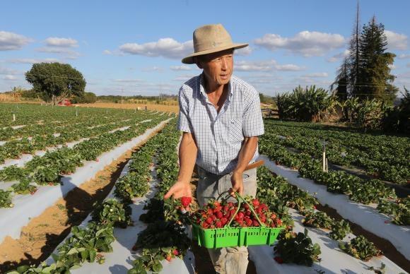 Censo Agro - Censo Agro já chegou a mais de 3 milhões de propriedades rurais