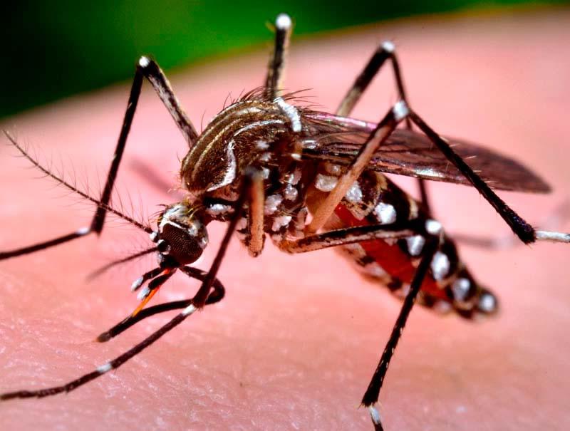 cordel dengue chikungunya e zika virus  - Em dois anos, Brasil deve ter nova epidemia de chikungunya