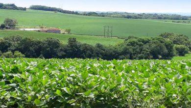 20056 390x220 - Cultura da soja tem cenários distintos no Rio Grande do Sul