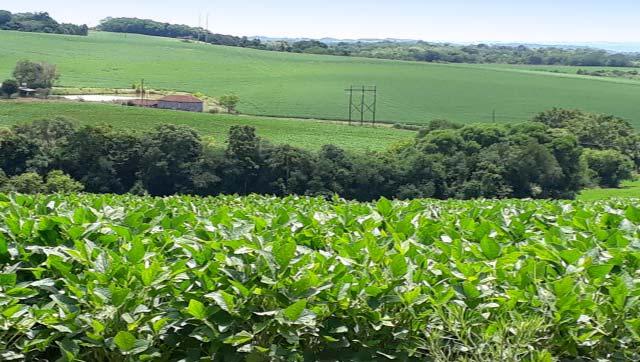 20056 - Cultura da soja tem cenários distintos no Rio Grande do Sul