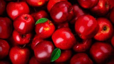 Maçã de Caxias do Sul 390x220 - Colheita da maçã deve chegar a 105 mil toneladas em Caxias do Sul