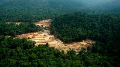 Photo of Amazônia SAR emitiu 20 mil alertas de desmatamento