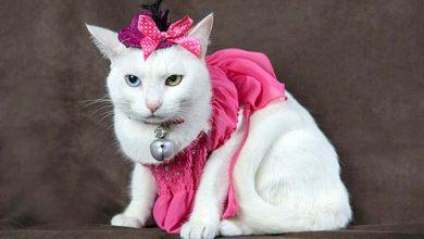 Saúde dos gatos 390x220 - Cães e gatos alertam para câncer de mama nos pets