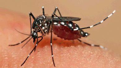 aedes 390x220 - Caxias do Sul tem 32 focos do mosquitoAedes aegypti