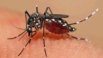 aedes 390x220 - Já são 30 focos do Aedes encontrados em Caxias do Sul