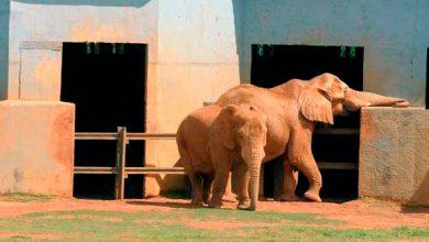 babu e belinha zoo 390x220 - Elefante que morreu no zoológico de Brasília pode ter sido envenenado