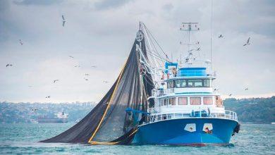 certificação de barcos de pesca e atracadouros 390x220 - MAPA realiza treinamento para certificação de barcos e atracadouros em SC