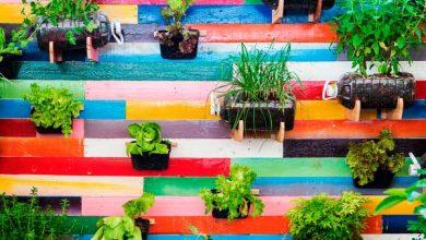Eu Que Plantei'1 390x220 - Isla cria kits de sementes para quem quer ter uma horta em casa