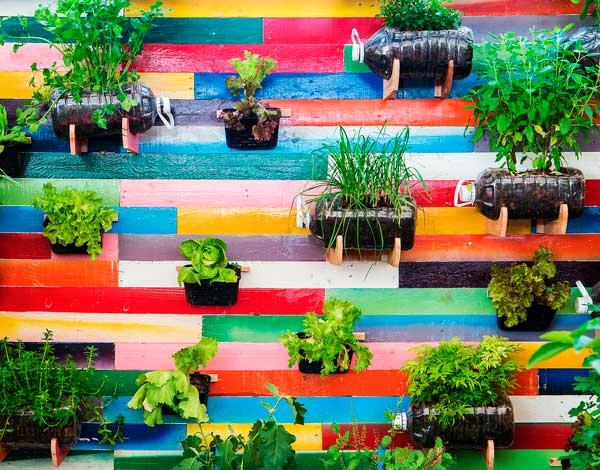 Eu Que Plantei'1 - Isla cria kits de sementes para quem quer ter uma horta em casa