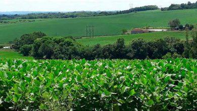 Dia de Campo em São Borja vai tratar da cultura da soja 390x220 - Soja: Projeto Lavoura de Resultados