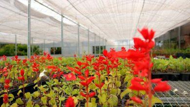 Horto Municipal de Caxias do Sul 1 390x220 - Horto Municipal de Caxias inicia produção das flores de inverno
