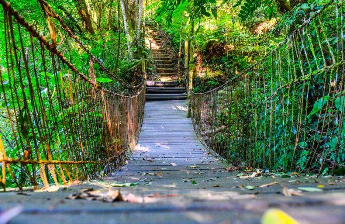 Jardim Botânico e no Mato Sartori 5 700x454 - Roteiros ecológicos no Jardim Botânico e no Mato Sartori em Caxias do Sul