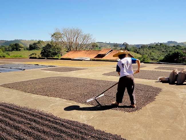 Leila rodando caf no terreiro Crdito Arquivo pessoal Leila e Margarida - Mulheres conquistam espaço na produção de café em Minas Gerais