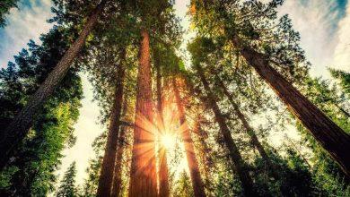 floresta 390x220 - Insegurança jurídica é o maior desafio para investimentos em negócios com florestas nativas