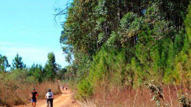 floresta nacional de brasilia danubia melo  390x220 - Flona de Brasília inaugura Rede de Trilhas de Caminhadas