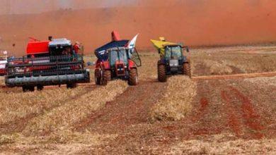 safra 1 390x220 - IBGE aponta que safra de 2018 terá redução na colheita
