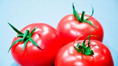 tomate 390x220 - Boas razões para comer tomates todos os dias