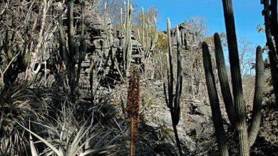 Cinco novas unidades de conservação abrangem três biomas brasileiros 390x220 - Cinco novas unidades de conservação abrangem três biomas brasileiros