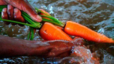 Governo do Brasil investe R 7 milhões em aquisição de sementes da agricultura familiar 390x220 - Governo do Brasil investe R$ 7 milhões em aquisição de sementes da agricultura familiar