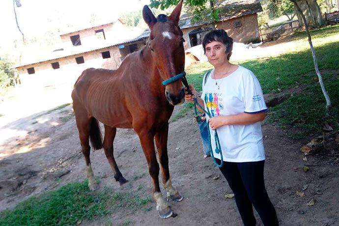 adoção cavalos poa - Prossegue programa da EPTC de adoção de cavalos em Porto Alegre