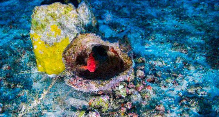 coral amazonas greenpeace 754x405 - MPF pede que Ibama indefira exploração de petróleo na foz do Amazonas