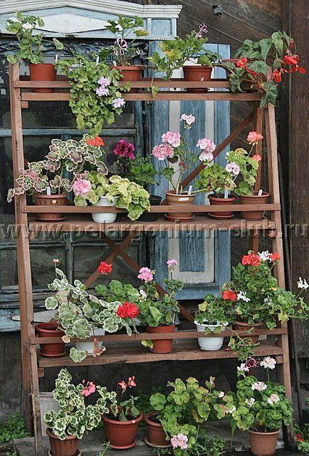2f9c0b8c8054dfaff19ebb201ea1d027 - Tendências Pinterest   decoração com plantas
