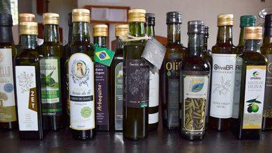 Photo of Primeira extração de azeite de oliva no país completa dez anos