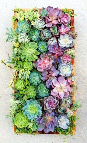 668346130704fc8a33ae4049387c9e14 286x468 - Tendências Pinterest   decoração com plantas