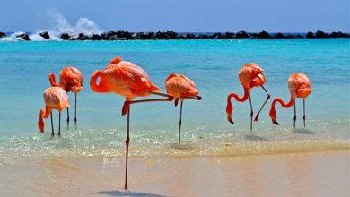 ARUBA4 390x220 - Aruba é o destino perfeito para uma viagem memorável