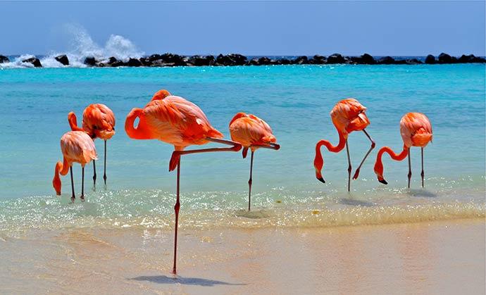 ARUBA4 - Aruba é o destino perfeito para uma viagem memorável