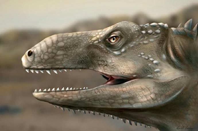 Pagosvenator candelariensis - Pesquisadores da UFRGS e da Univasf identificam novo réptil fóssil de 230 milhões de anos no RS