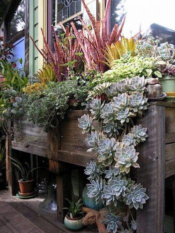 afb0100f39bb6dc7185fc621ea905af6 351x468 - Tendências Pinterest   decoração com plantas