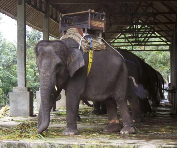 bali parques maus tratos vida silvestre relatorio world animal protection 2 2 - Maus-tratos à Vida Silvestre: Bali não atende aos padrões de bem-estar animal