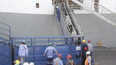Photo of Como funciona o transporte de cargas vivas para exportação